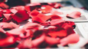 image de saint valentin, des pétales de roses
