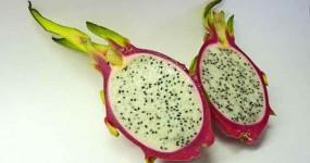Des fruits et de la sève de bouleau fraiche pour un dessert original
