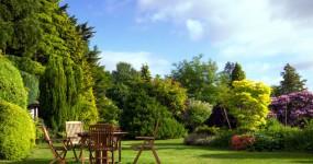 jardin-vert-été